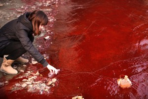 A woman collects a sample of the water flowing from a sewer into the Jian River in Luoyang, China on December 13, 2011. Red dye was dumped into the city's water network by two illegal dye workshops. (STR/AFP/Getty Images)