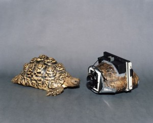 Turtleshell camera by Taiyo Onorato and Nico Krebs via Flavorwire