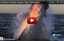 Slow Motion Shark Attack: A Phantom Captures a Predator in Action