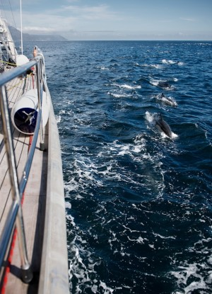 chase jarvis dolphin superpod 1
