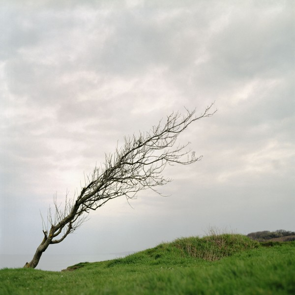Leaning_Tree