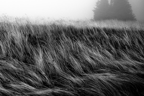 New Zealand Landscape-01